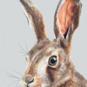 Scottish hare A3 fine art print