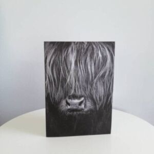 Highland cow greetings card with envelope.
