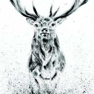 Stag standing strong. A4 print.