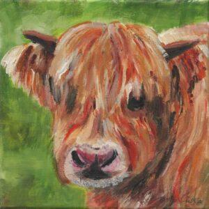 Alexander Highland Cow