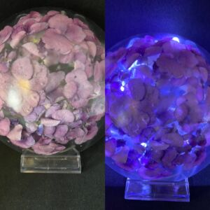Light up Hydrangea flower head large half dome