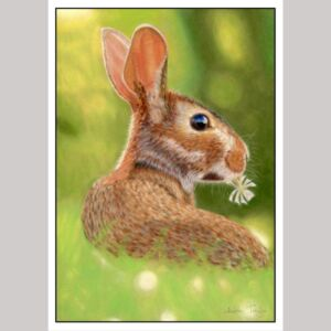 Rabbit fine art greetings card by Alan Taylor Art