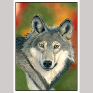 Wolf fine art greetings card by Alan Taylor Art
