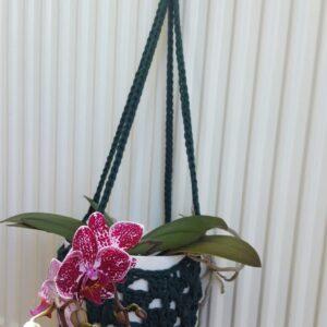 Dark green plant hanger with plant