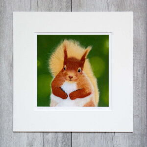 Red squirrel giclee print by Alan Taylor Art