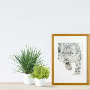 Snow Leopard giclee print by Alan Taylor Art